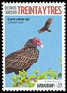 Cl: Turkey Vulture (Cathartes aura) <<Cuervo cabeza roja>>  new (2018)  [11/47]