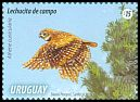 Cl: Burrowing Owl (Athene cunicularia) <<Lechucita de campo>> (Repeat for this country)  new (2015)  [10/6]