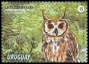 Cl: Striped Owl (Pseudoscops clamator) <<Lechuzón orejudo>>  new (2015)  [10/6]
