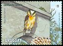 Cl: Buff-fronted Owl (Aegolius harrisii) <<Lechucita canela>>  new (2015)  [10/6]