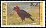 Cl: Southern Ground-Hornbill (Bucorvus leadbeateri)(Out of range)  SG 704 (1984) 350
