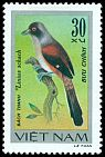 Cl: Long-tailed Shrike (Lanius schach) SG 187 (1978) 55