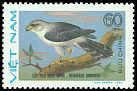 Cl: White-rumped Falcon (Polihierax insignis) SG 482 (1982) 50
