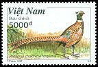 Cl: Ring-necked Pheasant (Phasianus colchicus torquatus)(Repeat for this country)  SG 2149 (1997)