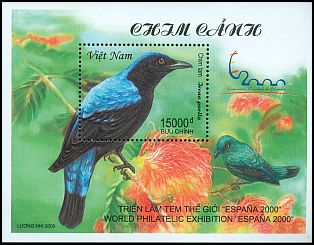Cl: Asian Fairy-bluebird (Irena puella) SG 2361 (2000)