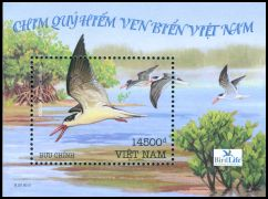 Cl: Indian Skimmer (Rynchops albicollis) SG 2815 (2010)  [6/41]