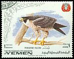 Cl: Peregrine Falcon (Falco peregrinus)(not catalogued)  (1965)