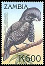 Cl: Amazonian Umbrellabird (Cephalopterus ornatus)(Out of range) (not catalogued)  (2000)