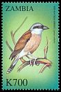 Cl: Red-backed Shrike (Lanius collurio)(not catalogued)  (2000)