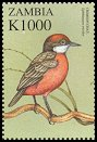 Cl: Crimson Chat (Epthianura tricolor)(Out of range) (not catalogued)  (2000)