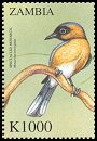 Cl: Spectacled Monarch (Monarcha trivirgatus)(Out of range and no other stamp) (not catalogued)  (2000)