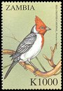 Cl: Red-crested Cardinal (Paroaria coronata)(Out of range) (not catalogued)  (2000)