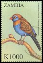 Cl: Purple Grenadier (Uraeginthus ianthinogaster)(Out of range and no other stamp) (not catalogued)  (2000)