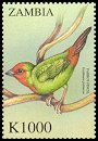 Cl: Red-throated Parrotfinch (Erythrura psittacea)(Out of range) (not catalogued)  (2000)