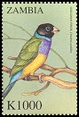Cl: Gouldian Finch (Chloebia gouldiae)(Out of range) (not catalogued)  (2000)