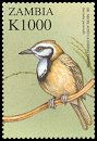 Cl: Greater Necklaced Laughingthrush (Garrulax pectoralis)(Out of range) (not catalogued)  (2000)