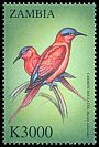 Cl: Southern Carmine Bee-eater (Merops nubicoides)(Repeat for this country) (not catalogued)  (2000)